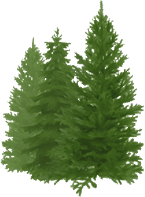 Evergreen Lane Farm Tree graphic