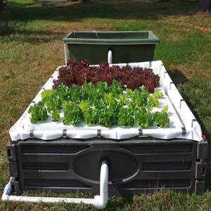 64 plant aquaponic kit