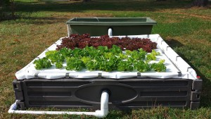 64 plant 4'x4' aquaponic kit
